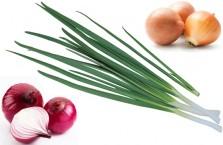 Полезные свойства и вред лука, калорийность