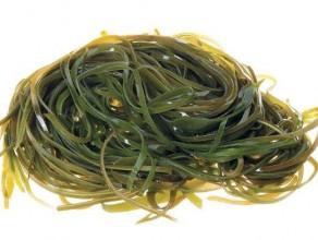 Польза и лечебные свойства морской капусты