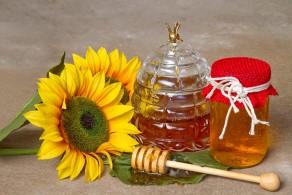Подсолнечный мед - польза и вред