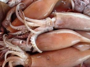 кальмары - полезные свойства и вред