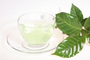 Польза и вред белого чая