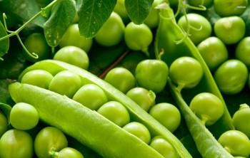 Польза и калорийность зеленого горошка
