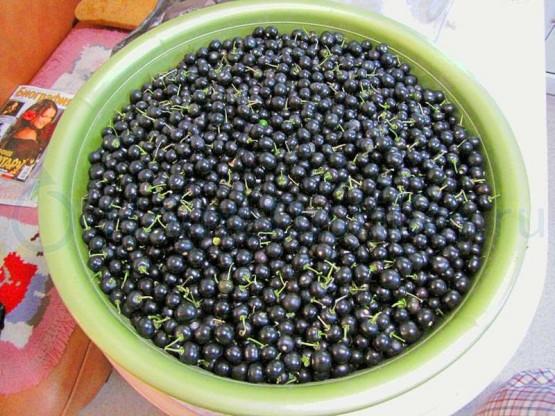 Ягода санберри полезные свойства