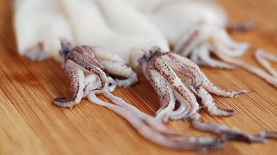 мясо кальмаров содержит железо, фосфор, йод